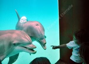 Rencontre d'Océane avec les dauphins